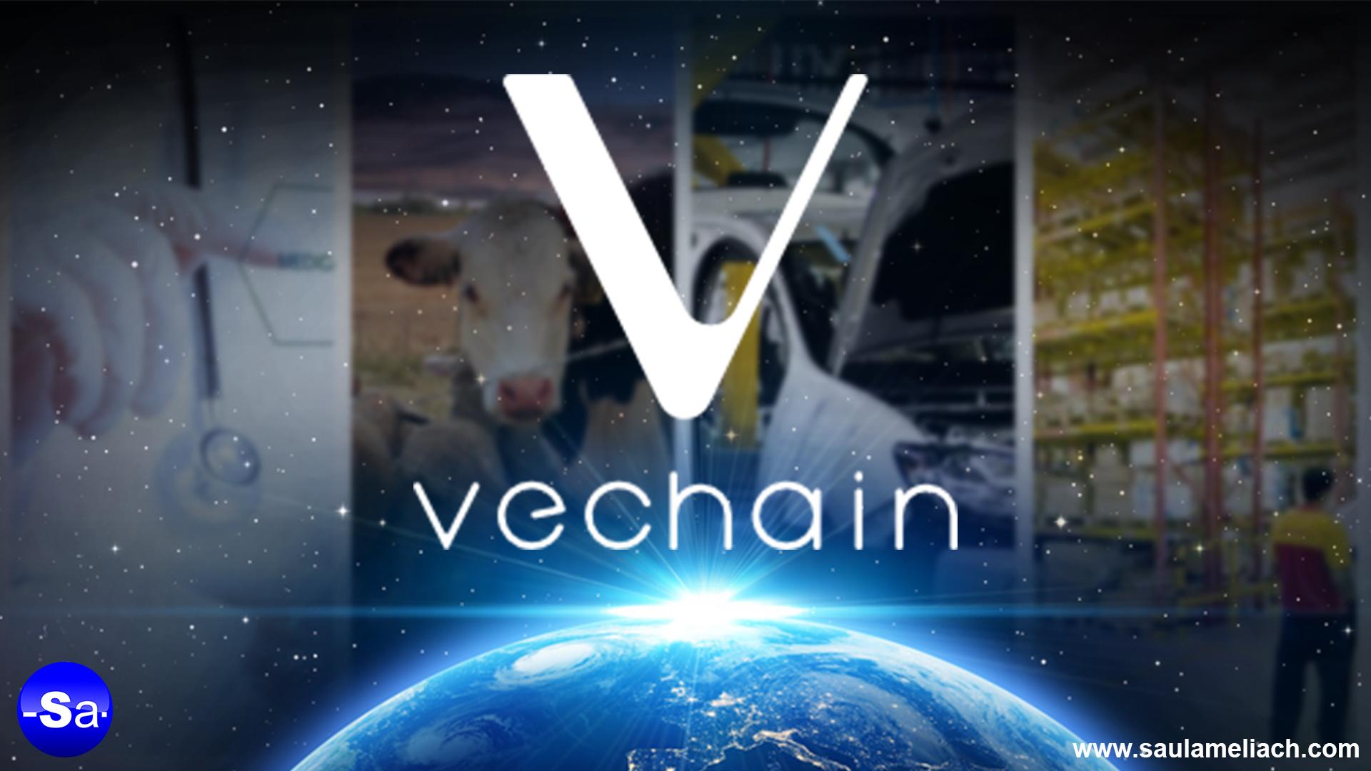 VeChain saul ameliach